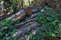 2020-05-31 Covid 19 Walk Alder Hills Nature Reserve Poole, Dorset. (18) 018