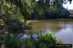 2020-05-31 Covid 19 Walk Alder Hills Nature Reserve Poole, Dorset. (26) 026