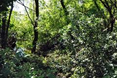 2020-05-31 Covid 19 Walk Alder Hills Nature Reserve Poole, Dorset. (34) 034