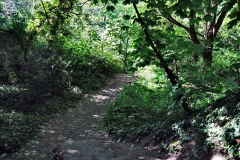 2020-05-31 Covid 19 Walk Alder Hills Nature Reserve Poole, Dorset. (4) 004