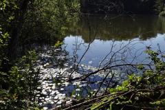 2020-05-31 Covid 19 Walk Alder Hills Nature Reserve Poole, Dorset. (6) 006