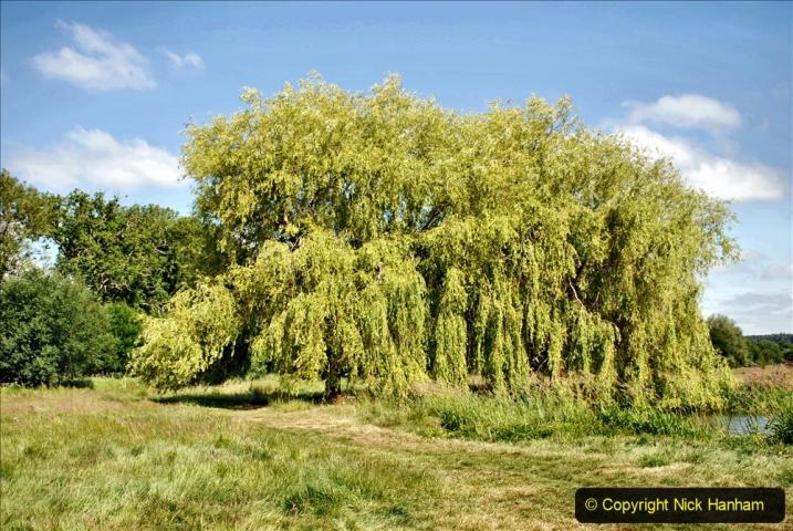2020-June 08 Covid 19 Walk Canford Park SANG Bearwood, Poole, Dorset. (21) 021