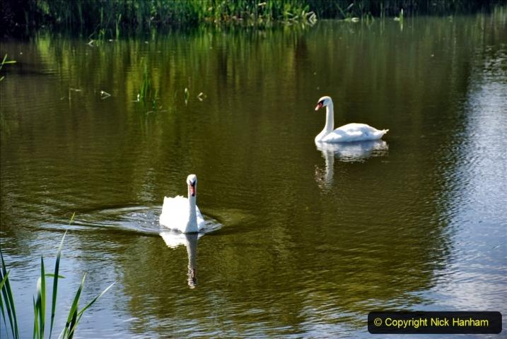 2020-June 08 Covid 19 Walk Canford Park SANG Bearwood, Poole, Dorset. (26) 026
