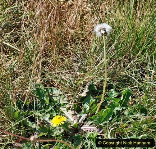 2020-June 08 Covid 19 Walk Canford Park SANG Bearwood, Poole, Dorset. (29) 029