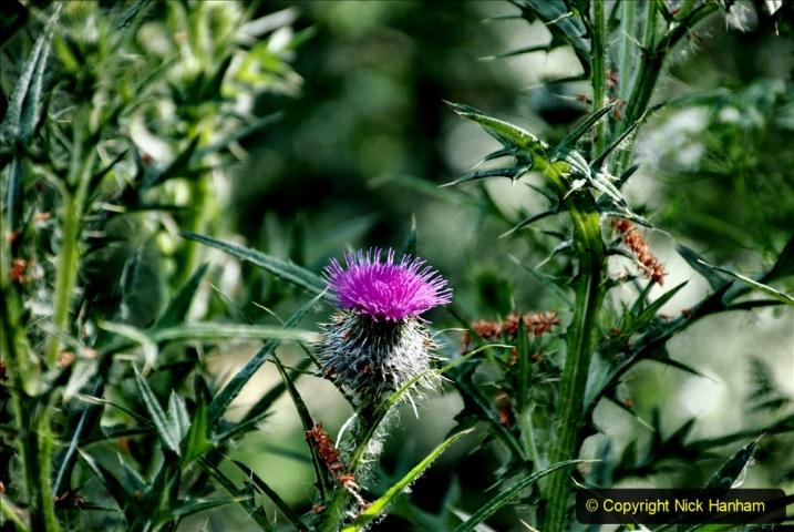 2020-June 08 Covid 19 Walk Canford Park SANG Bearwood, Poole, Dorset. (42) 042