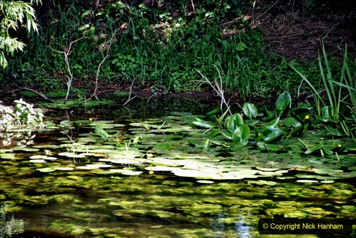 2020-June 08 Covid 19 Walk Canford Park SANG Bearwood, Poole, Dorset. (51) 051