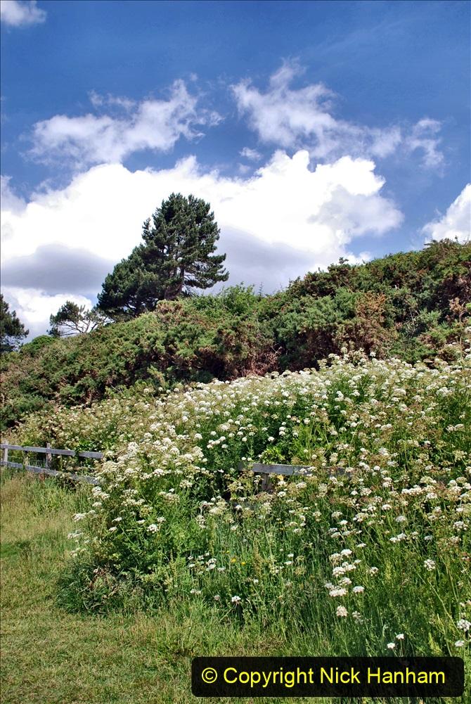 2020-06-09 Covid 19 Walks Constitution Hill & Evening Hill Poole, Dorset. (13) 013