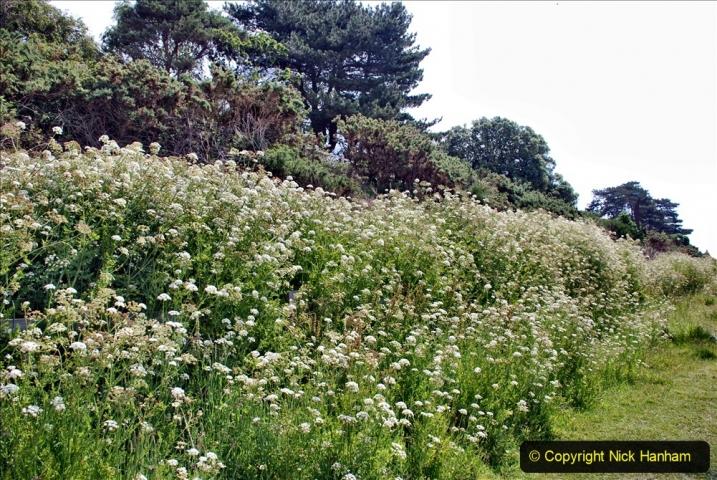 2020-06-09 Covid 19 Walks Constitution Hill & Evening Hill Poole, Dorset. (12) 012