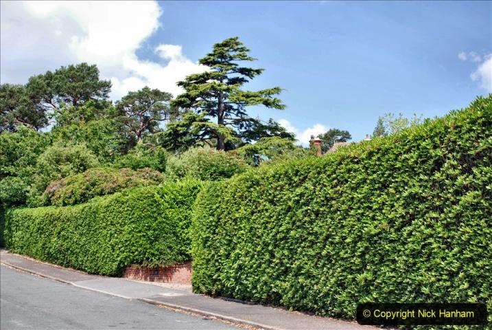 2020-06-09 Covid 19 Walks Constitution Hill & Evening Hill Poole, Dorset. (27) 027
