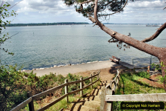 2020-06-09 Covid 19 Walks Constitution Hill & Evening Hill Poole, Dorset. (10) 010