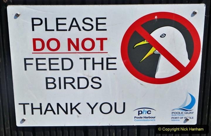 0012020-06-25 Covid 19 Walk Home-Poole Park-Poole Town-Poole Quay-Baiter-Home. (115) 115