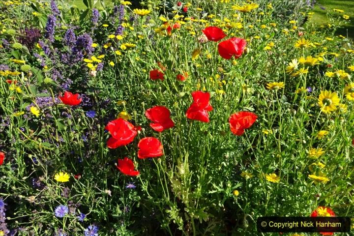 0012020-06-25 Covid 19 Walk Home-Poole Park-Poole Town-Poole Quay-Baiter-Home. (29) 029