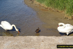0012020-06-25 Covid 19 Walk Home-Poole Park-Poole Town-Poole Quay-Baiter-Home. (18) 018