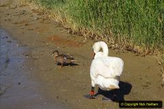 0012020-06-25 Covid 19 Walk Home-Poole Park-Poole Town-Poole Quay-Baiter-Home. (19) 019