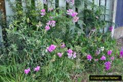0012020-06-25 Covid 19 Walk Home-Poole Park-Poole Town-Poole Quay-Baiter-Home. (2) 002