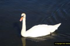 0012020-06-25 Covid 19 Walk Home-Poole Park-Poole Town-Poole Quay-Baiter-Home. (20) 020