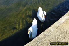 0012020-06-25 Covid 19 Walk Home-Poole Park-Poole Town-Poole Quay-Baiter-Home. (21) 021
