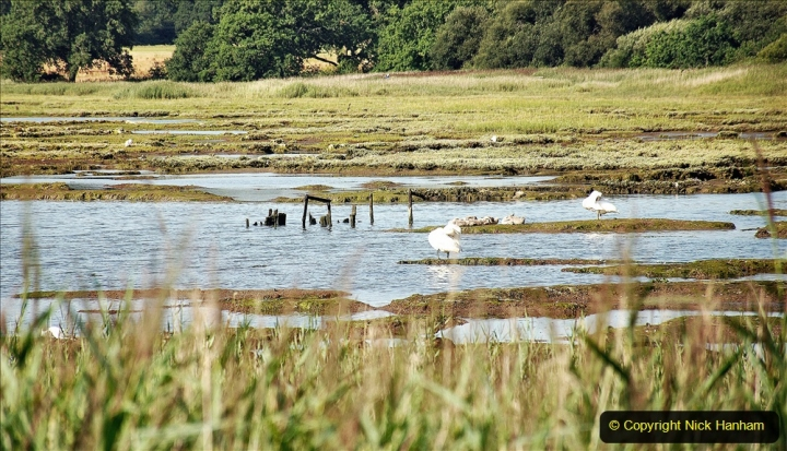 2020-07-31 Covid 19 Walk Poole Inner Harbour to Upton Country Park and return. (41)