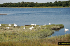 2020-07-31 Covid 19 Walk Poole Inner Harbour to Upton Country Park and return. (14)