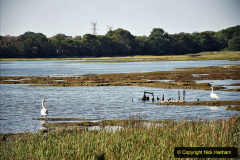 2020-07-31 Covid 19 Walk Poole Inner Harbour to Upton Country Park and return. (42)
