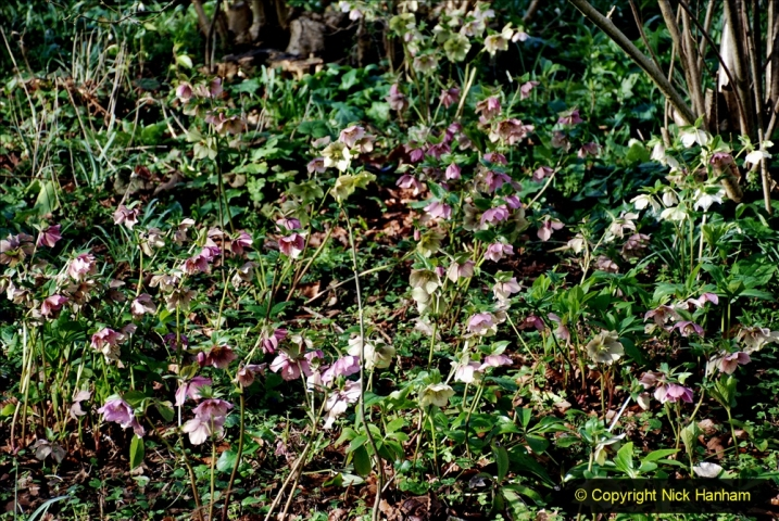 2020-02-27 The Courts Garden (NT) Holt, near Bradford on Avon, Wiltshire. (24) 276