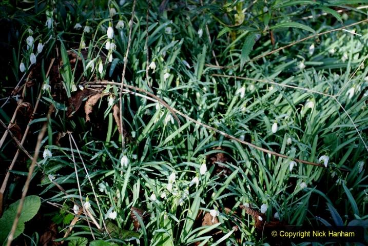 2020-02-27 The Courts Garden (NT) Holt, near Bradford on Avon, Wiltshire. (28) 280