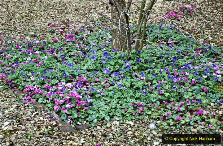 2020-02-27 The Courts Garden (NT) Holt, near Bradford on Avon, Wiltshire. (3) 255