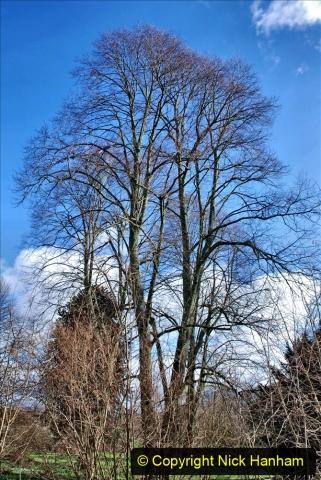 2020-02-27 The Courts Garden (NT) Holt, near Bradford on Avon, Wiltshire. (30) 282