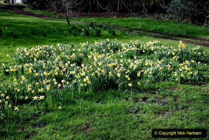 2020-02-27 The Courts Garden (NT) Holt, near Bradford on Avon, Wiltshire. (34) 286