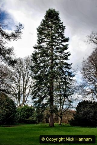 2020-02-27 The Courts Garden (NT) Holt, near Bradford on Avon, Wiltshire. (40) 292