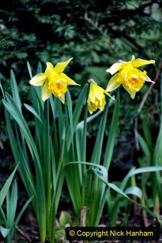 2020-02-27 The Courts Garden (NT) Holt, near Bradford on Avon, Wiltshire. (41) 293
