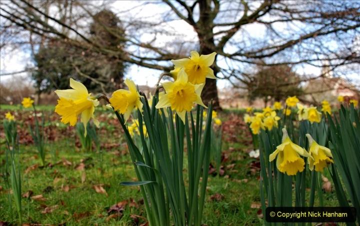 2020-02-27 The Courts Garden (NT) Holt, near Bradford on Avon, Wiltshire. (42) 294