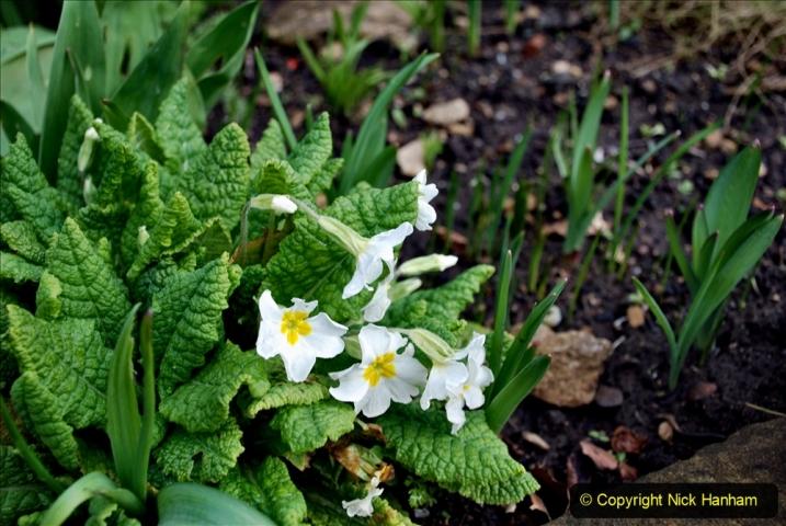 2020-02-27 The Courts Garden (NT) Holt, near Bradford on Avon, Wiltshire. (48) 300