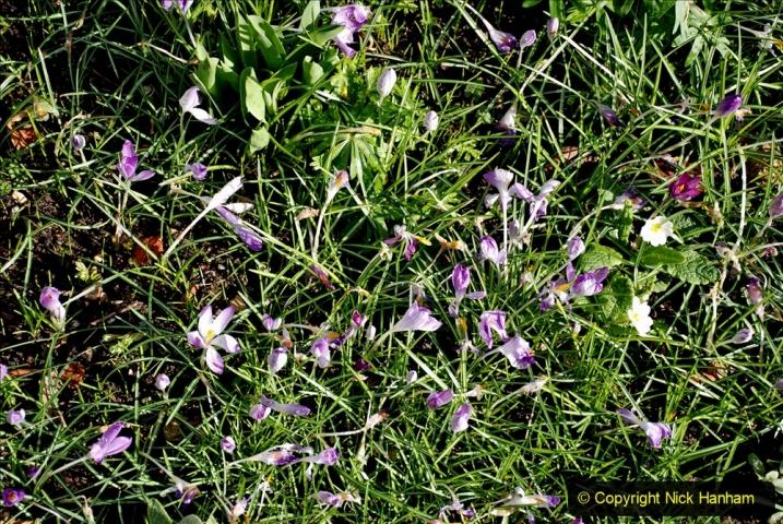 2020-02-27 The Courts Garden (NT) Holt, near Bradford on Avon, Wiltshire. (55) 307