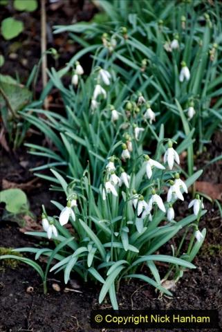 2020-02-27 The Courts Garden (NT) Holt, near Bradford on Avon, Wiltshire. (80) 332