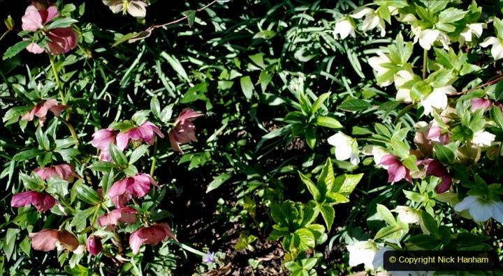 2020-02-27 The Courts Garden (NT) Holt, near Bradford on Avon, Wiltshire. (93) 345