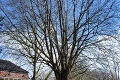 2020-02-26 Trowbridge, Wiltshire. (43) 217