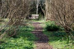 2020-02-27 The Courts Garden (NT) Holt, near Bradford on Avon, Wiltshire. (25) 277