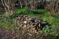 2020-02-27 The Courts Garden (NT) Holt, near Bradford on Avon, Wiltshire. (29) 281