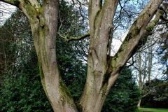 2020-02-27 The Courts Garden (NT) Holt, near Bradford on Avon, Wiltshire. (37) 289