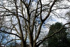 2020-02-27 The Courts Garden (NT) Holt, near Bradford on Avon, Wiltshire. (38) 290