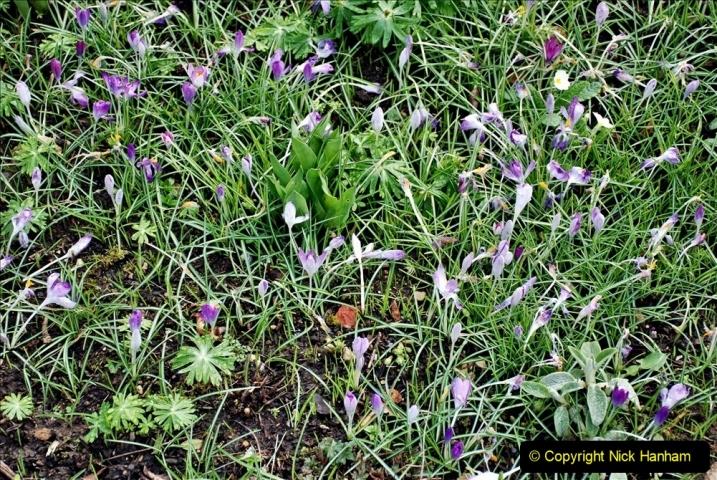 2020-02-27 The Courts Garden (NT) Holt, near Bradford on Avon, Wiltshire. (16) 268
