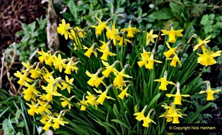 2020-02-27 The Courts Garden (NT) Holt, near Bradford on Avon, Wiltshire. (17) 269