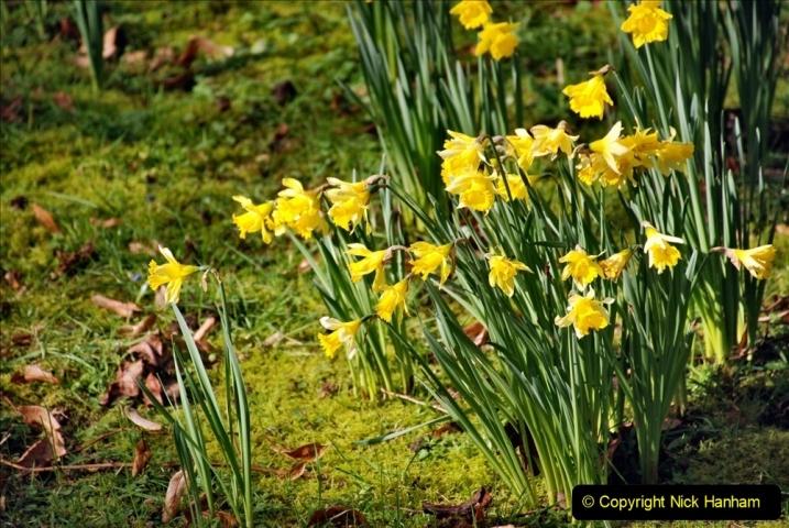 2020-02-27 The Courts Garden (NT) Holt, near Bradford on Avon, Wiltshire. (44) 296