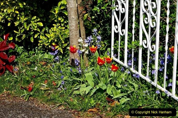 2020 April Covid 19 local walks during lock down. (66) 066