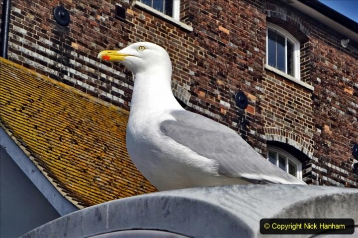 2020 May 09 Covid 19 Walk to Poole Dorset. (104) 104