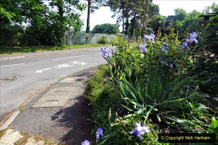 2020 May 09 Covid 19 Walk to Poole Dorset. (153) 153