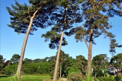 2020-05-06 Covid 19 Walk Parkstone Golf Club second time.  34) 034