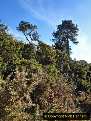 2021-01-15 Covid 19  Walk 2021 Evening Hill - Poole Quay - Trees. (10) 010