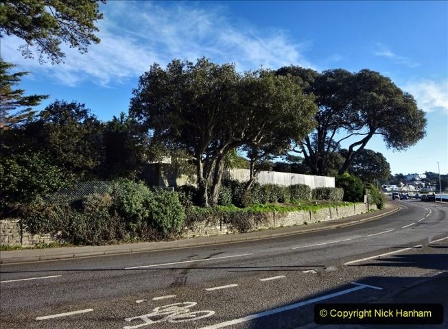 2021-01-15 Covid 19  Walk 2021 Evening Hill - Poole Quay - Trees. (16) 016
